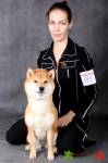 Сафонова Елена и сиба-ину SHOJO AKARUI CHISAI