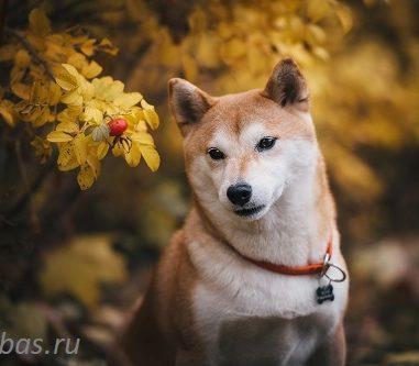 ZLOTA NO OMOCHA (Феня)