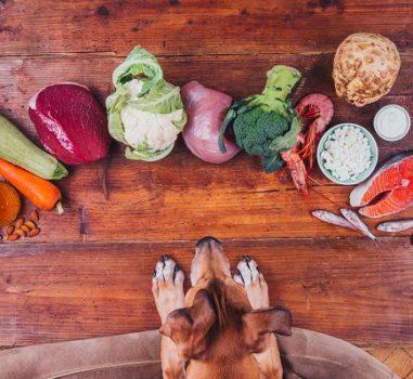 Натуральное питание собак