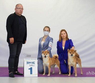 19 июля 2020 Выставки собак в Москве